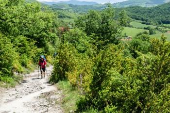 Hillside where we heard our first Common Cuckoo
