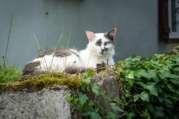 Camino cat