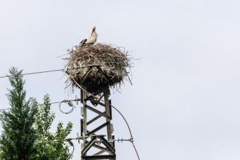 One of our first stork nests