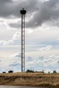 Stork nest, Bercianos del Real Camino