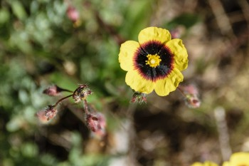 Trailside wildflower