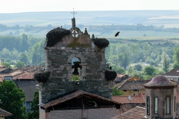 View of steeple with stork nests from the overlook