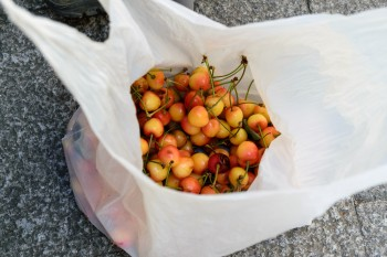 Cherries from Matilde's tree