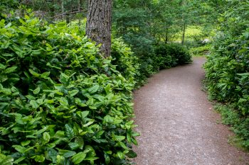 Trail to Glencoe Lochan