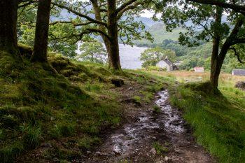 Abandoned homesite, Loch Lomond