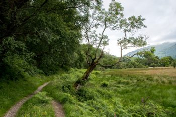 Trail near Beinglas Farm, Inverarnan