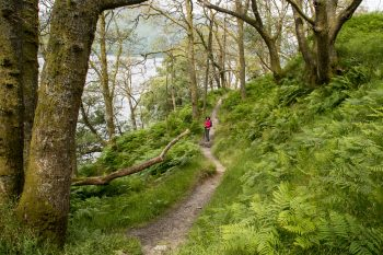 Trail along Loch Lomond